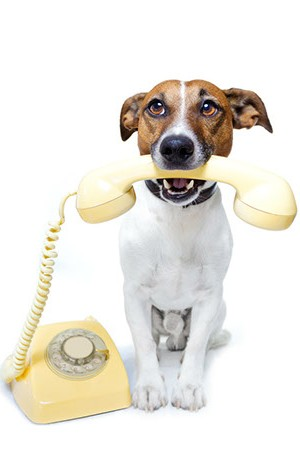 kronopet al telefono